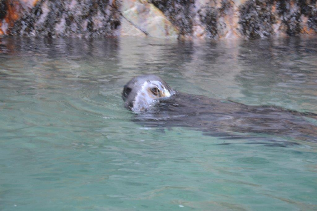 Monitoring Seals for the Cornwall Seal Group