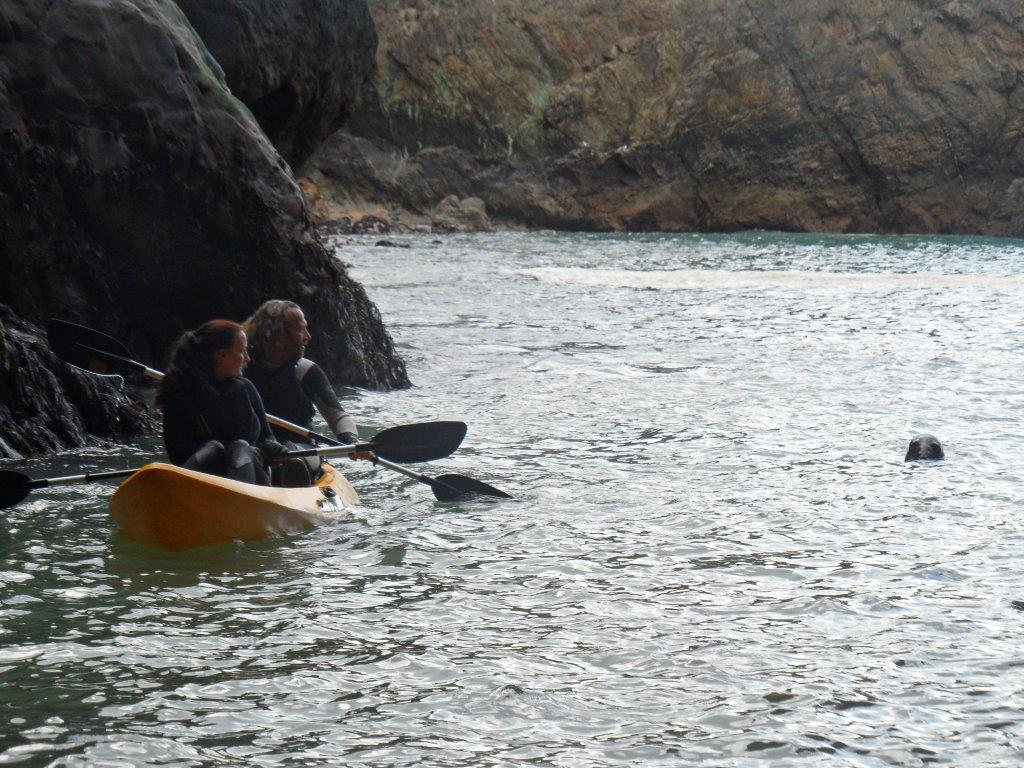 Kayaking Seal Cornwall