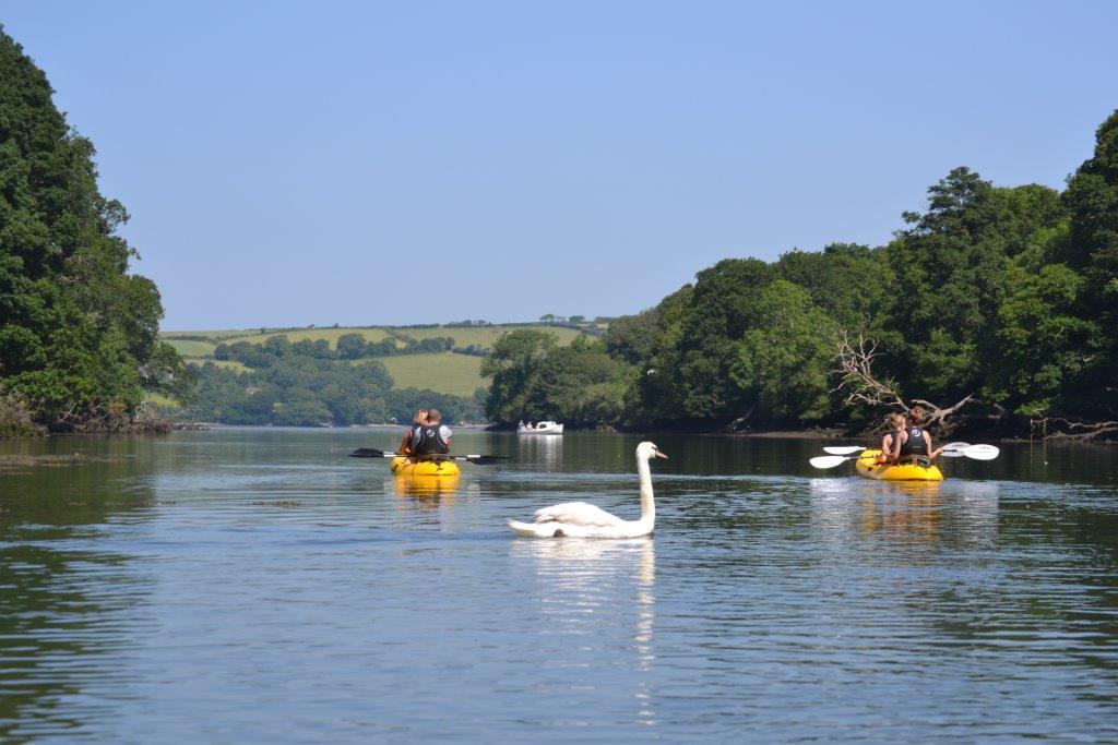 swan on frenchmans creek