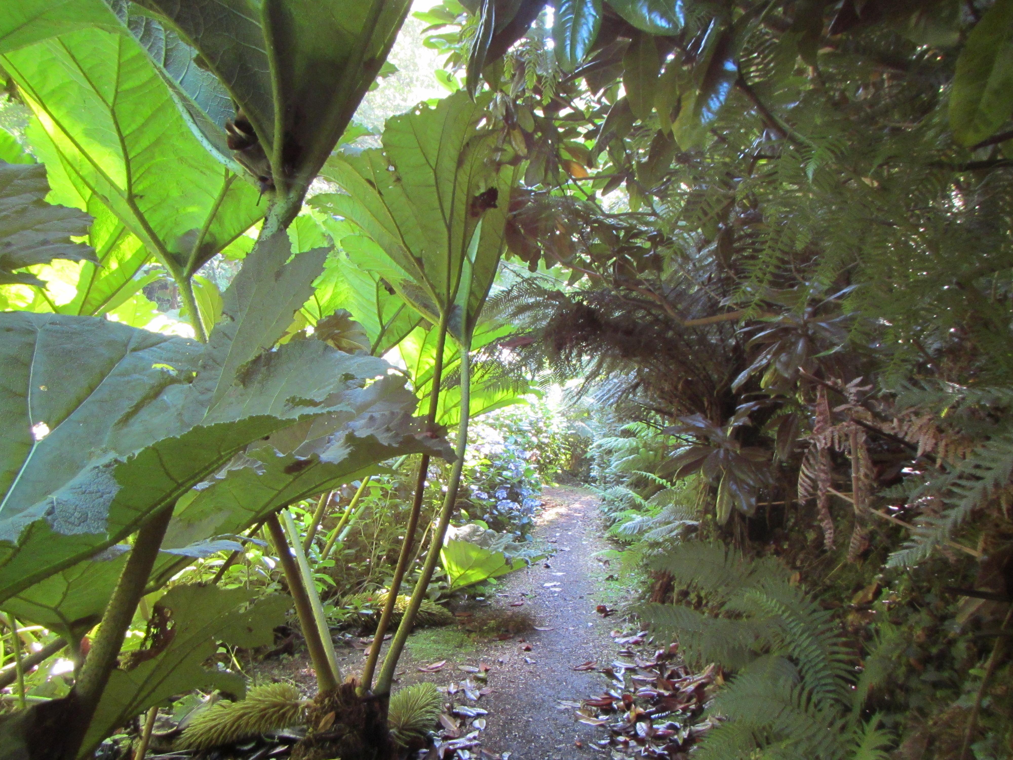 Giant Rubarb walkway adds to the Frenchman's Creek Kayak Adventures this Autumn