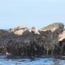Seal Pup Koru Kayaking