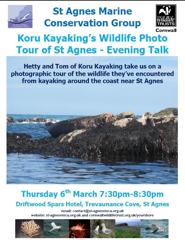 Koru Kayaking, Marine Conservation, seals