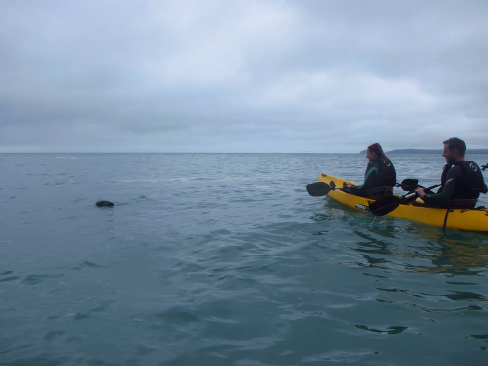 Seals, kayaking  in St Agnes with Koru Kayaking