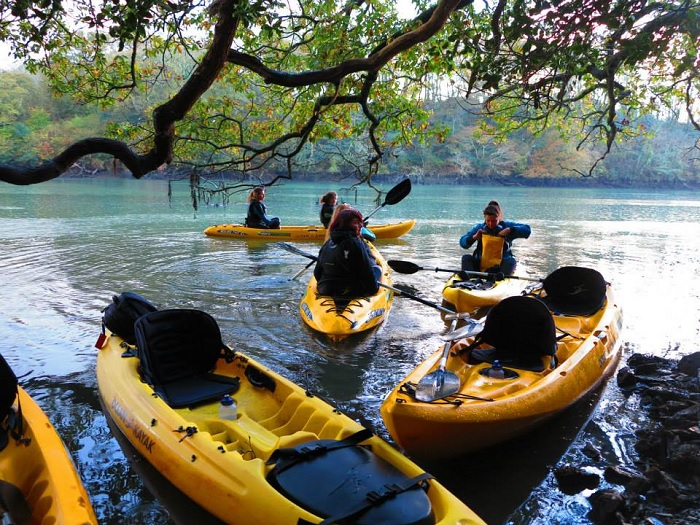 Koru Kayaking, ancient oak trees, Frenchman's Creek, November