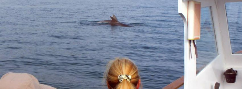 Dophins spotted on a cruise