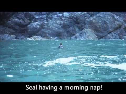 sleeping seal, grey seal, koru kayaking , cornwall