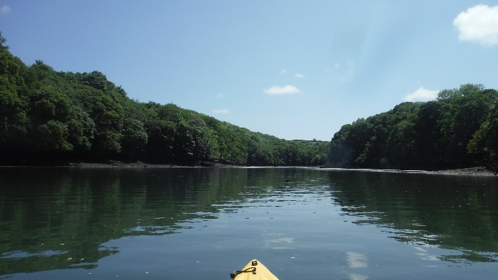 Soaking up the Wildlife on Frenchman's Creek