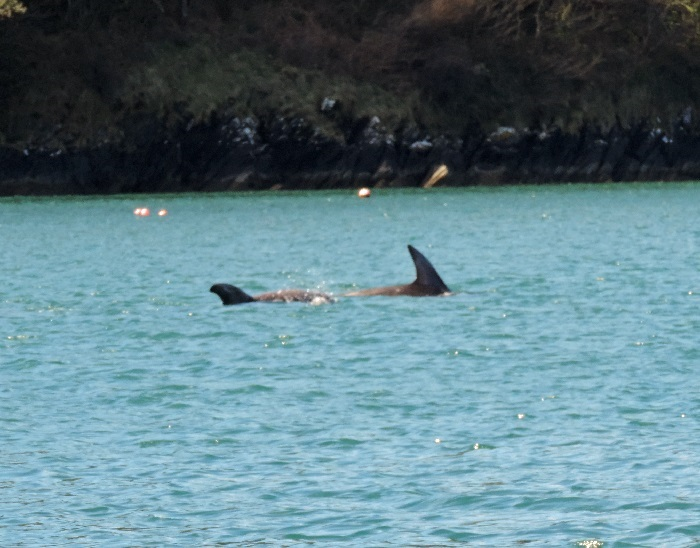 Helford River Wildlife Watch: June