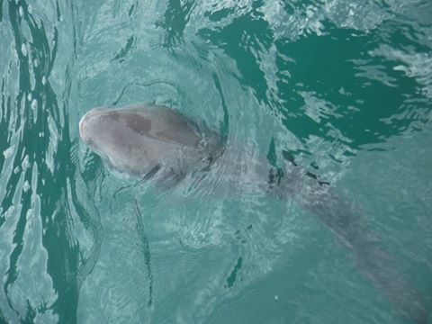 friendly sunfish