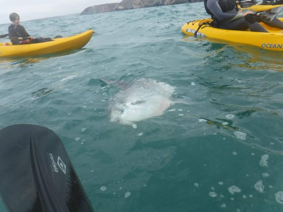 sunfish 4