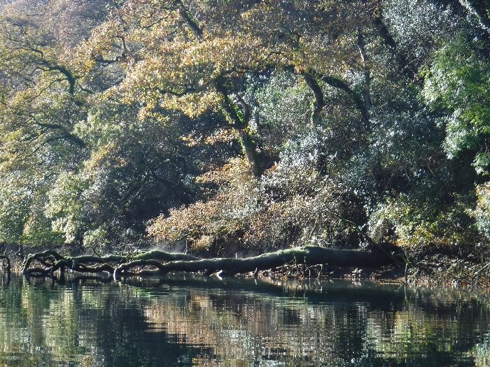 autumnal-leaves-frenchmans-creek