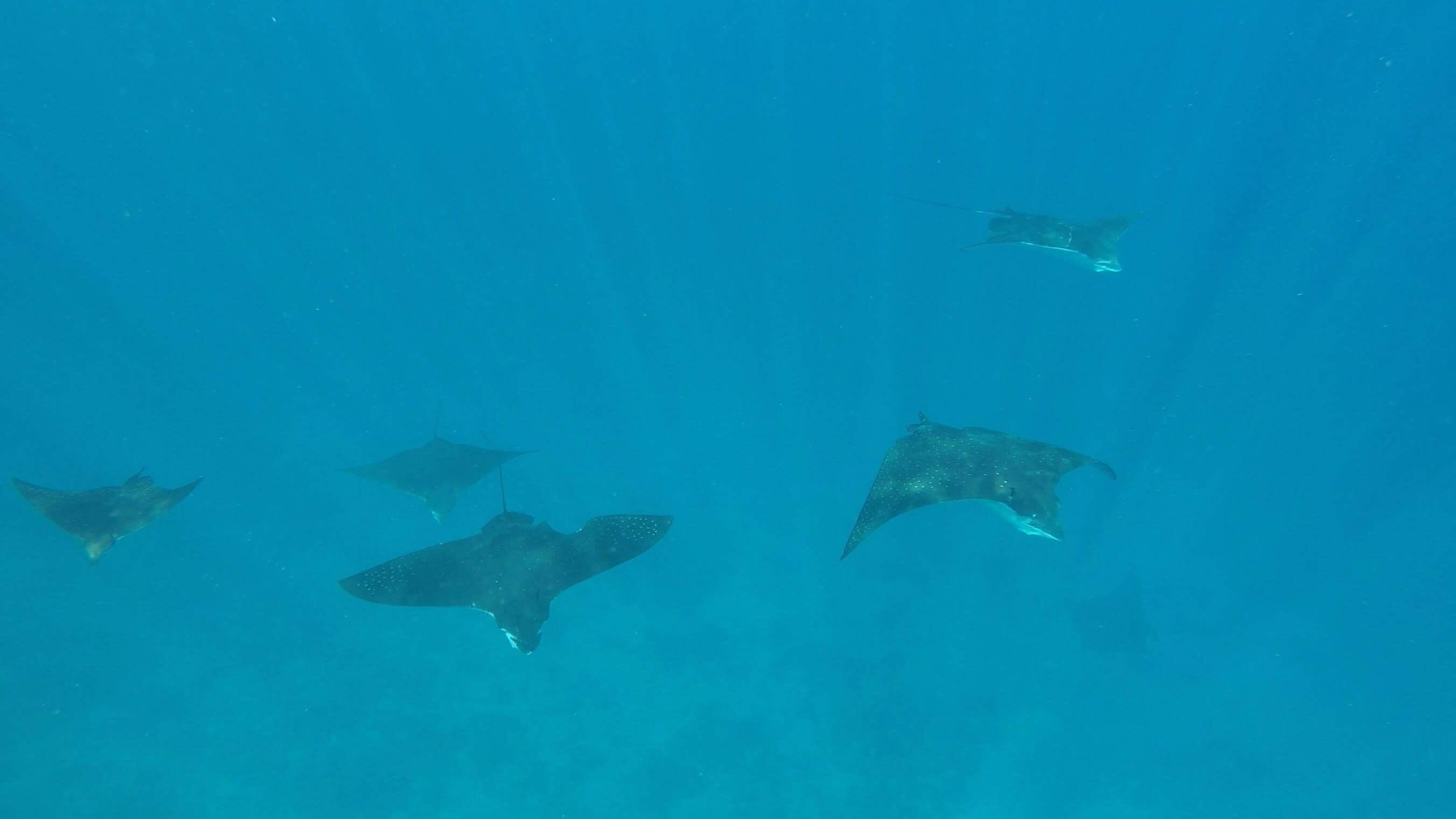 Koru snorkel the Great Barrier Reef!