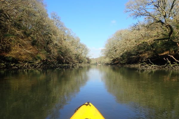Kayaking along Frenchman's Creek